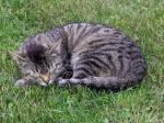 Etwas einfaches, was bringt die Katzen zum einschlafen?