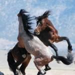 Was ist deine Lieblings Pferderasse?