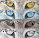 In welchem Clan wärst du bei Warrior Cats?