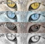 In welchem Clan wärst du bei Warrior Cats?