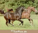 Wenn du dein Pferd auf der Koppel beobachtest, wie fühlt es sich dort?