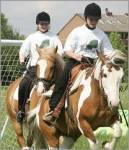 Kennst du dich mit Pferden und dem Reitsport aus?