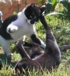 Welche Katze kannst du nicht so gut leiden? (Keine Namen werden genannt)