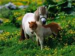 Wie lange würdest du das Pferd behalten?