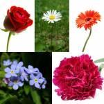 Welche dieser Blumen gefällt dir am meisten? (siehe Bild, falls unbekannt)