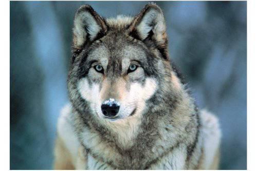 ab wie viel jahren ist teen wolf