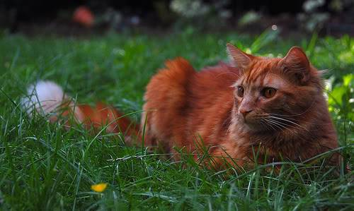 Warrior Cat Hazel