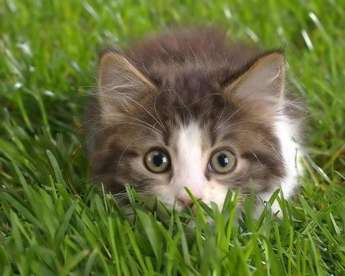 Katzen Ausmalbilder Warrior Cats : Warrior Cats Dein Leben In Einem Rollenspiel Seite 1