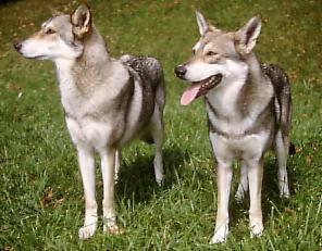 Hunderassen Vom Mops Bis Zum Wolfshund