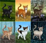 Warrior Cats wer bist du?