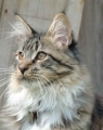 Es stellt sich heraus dass diese Katze eine Clan-Katze war. Du begegnest am nächsten Tag 3 von ihnen und sie fragen dich ob du dich dem Clan anschlie