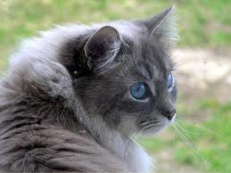 What Is Your Warrior Cats Name And Clan Quiz