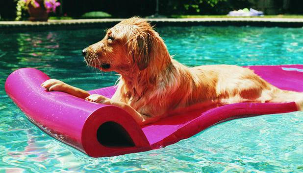 Wie entspannst du im sommer for Materassini piscina