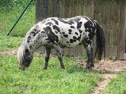 Pferde Test