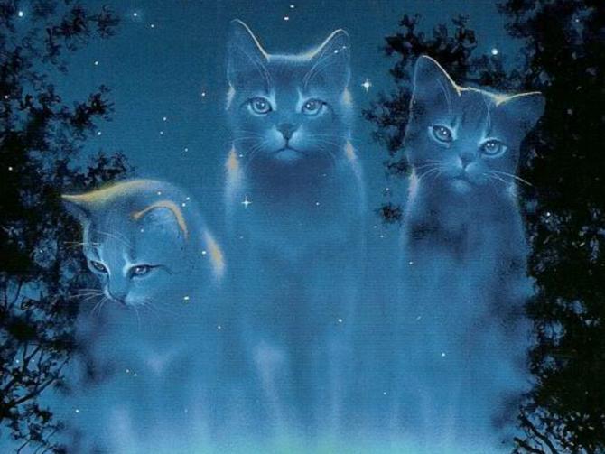 Welche Katze Bin Ich Warrior Cats Weiblich