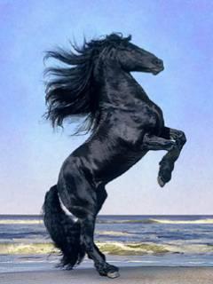 kennst du dich mit pferden aus. Black Bedroom Furniture Sets. Home Design Ideas