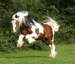 Ab welchem Alter ist ein Pferd geschlechtsreif?