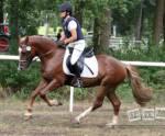 Wie viele Pferderassen gibt es ungefähr auf der Welt?