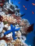 Wie viele verschiedene Fischarten gibt es im Great Barrier Reef?
