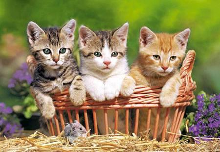 Wer Bin Ich Aus Warrior Cats