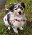 Was denkst du über Hundesport?