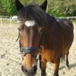 Wie schnell soll dein Pferd sein?
