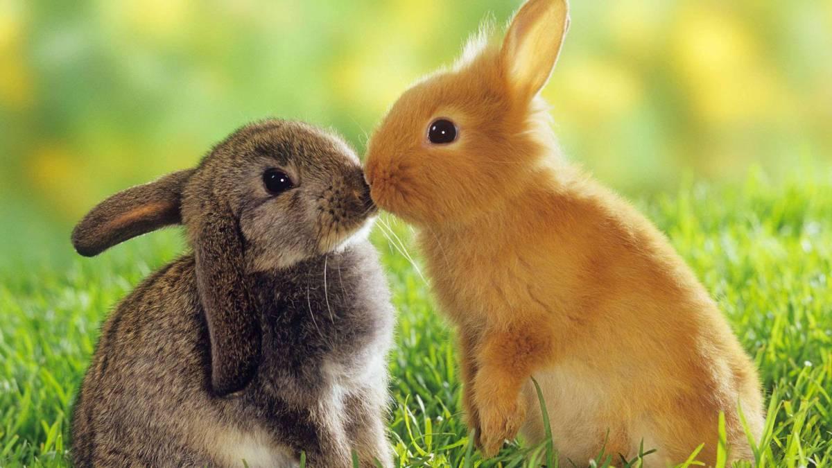 Bildergebnis für bilder kaninchen