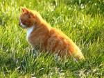 Warrior Cats - Welche Katze aus meinem ausgedachten Clan bist du?