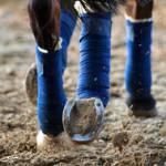 Was für einen Beinschutz benutzt du denn für dein Pferd?
