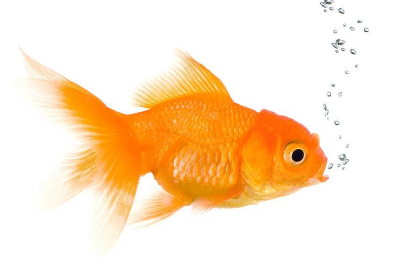 К чему снится рыба в аквариуме женщине