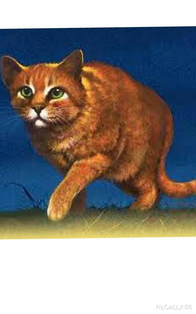 Mikusch Warrior Cats