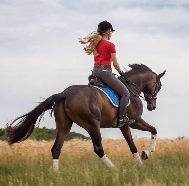 welche art von reiter bist du welches pferd passt zu dir