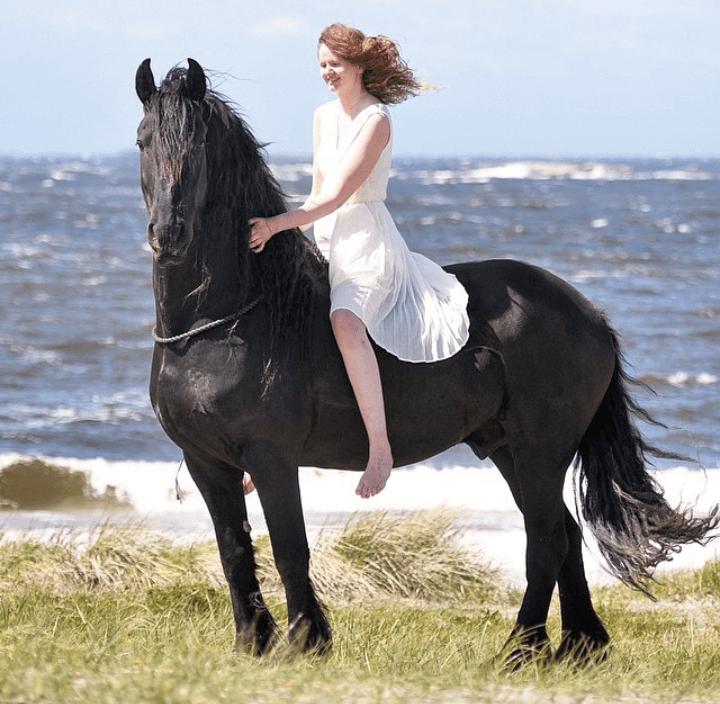 blog welches pferd passt