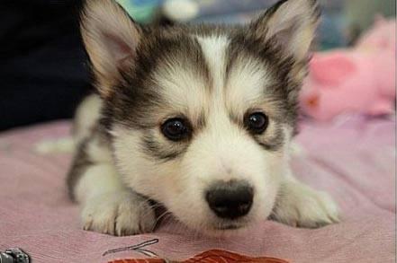 die süßesten baby hunde der welt