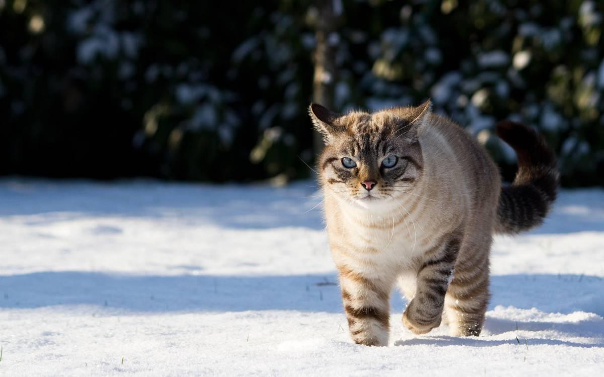 Warrior Cats Rpg Aktiv