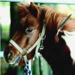 Sei ganz ehrlich, hast du zuhause Pferdesachbücher?