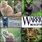 Warrior Cats - Die Rückkehr der Vier