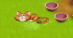 Die Katzen im Spiel trinken ... .