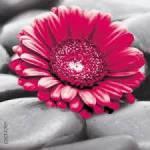 Wie würdest du als Blume aussehen