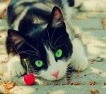 Warrior Cats - Eine Heilerliebe