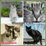 Warrior Cats-Ein neuer Anfang