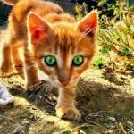 ((bold)) Und das ist meine Schwester((ebold)) Name: Feuerflug Alter: 15 Monde Rang: Kriegerin Geschlecht: Kätzin Aussehen: Feuerrote Kätzin mit wei�