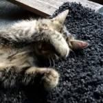((purple))((bold))((unli))News((ebold))((eunli))((epurple)) ((cur)) Alle Katzen, die übernommen werden können((ecur)) ((bold))Streunergruppe((ebold)