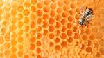 Getrocknete Nesseln mit Honig bestrichen