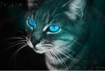 1. Clan: DER HERZCLAN Anführerin: ROSENSTERN-weiße Kätzin mit Goldenen und braunen Streifen; blaue Augen 2. Anführer: ADLERSCHWINGE-dunkelbraun ge