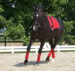 Wie oft machst du Bodenarbeit mit deinem Pferd? Oder longierst du es?