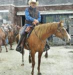 Wie wohnt denn dein Pferd?
