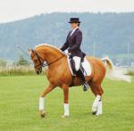 Was machst du am liebsten mit deinen Pferden/deinem Pferd?