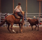 Dein Pferd hat sich nach einem Jahr wieder erholt. Wie geht es jetzt weiter?