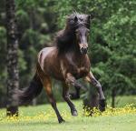 Wann putzt du dein Pferd und wie lange?